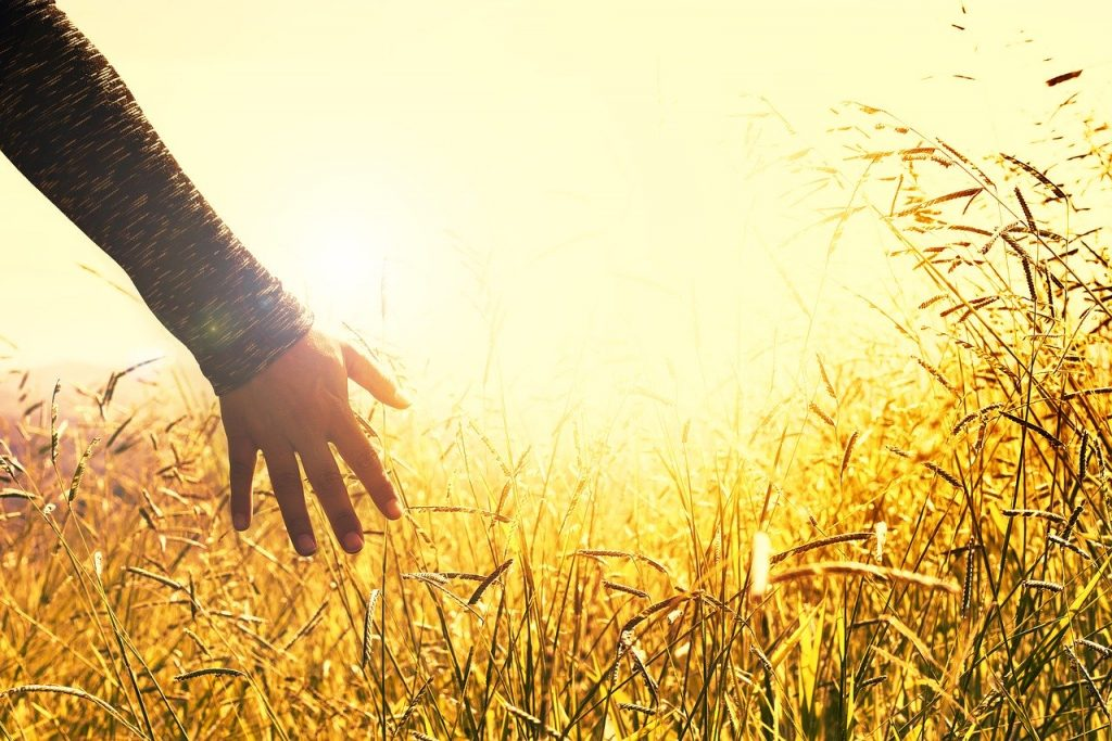 hands, grasses, sunset